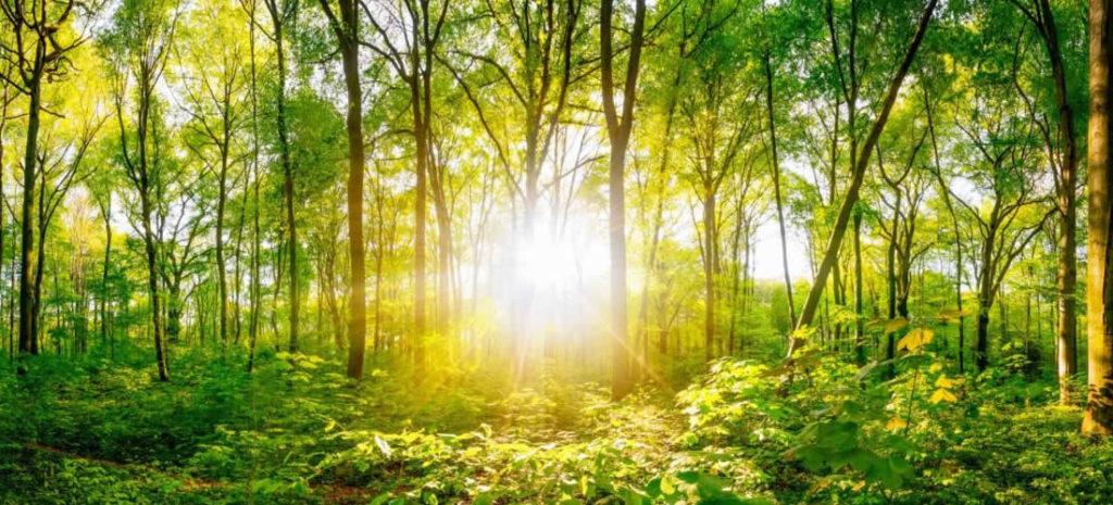 Klima a příroda: klíčové pilíře správného zotavení zCOVID-19 (anglicky)