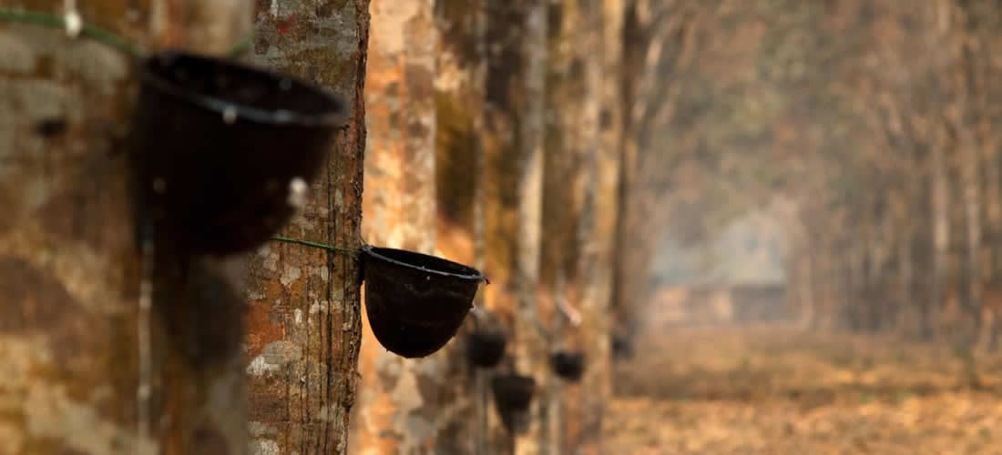 GPSNR: New policy framework drives commitment to sustainable natural rubber production, sourcing