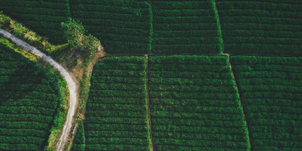 """Vláda Spojeného království projednává nový """"světový"""" zákon na ochranu deštných pralesů a čištění dodavatelských řetězců (anglicky)"""