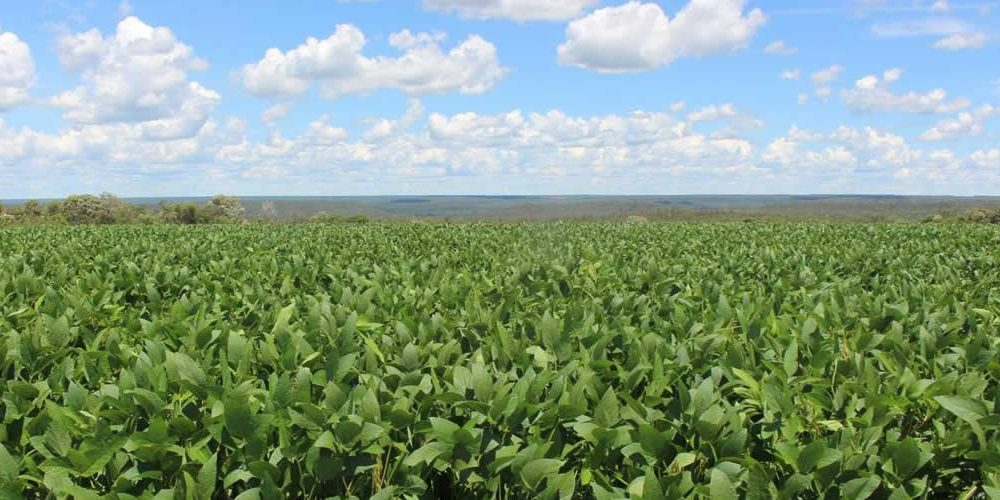 The Soft Commodities Forum reports significant progress in sustainable soy efforts
