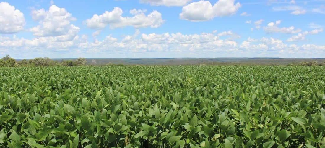 Fórum měkkých komodit podává významný pokrok vudržitelném úsilí o sóju