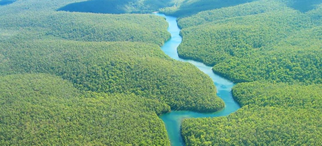 Businesses call for deeper partnership to build a more forest positive future