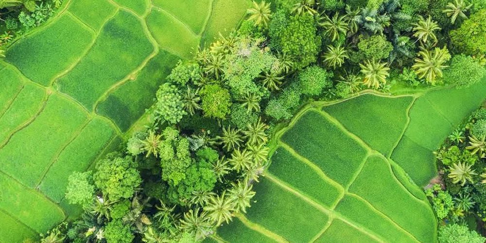 Healthy People, Healthy Planet: Linking Nutrition And Sustainability Through Food Choices