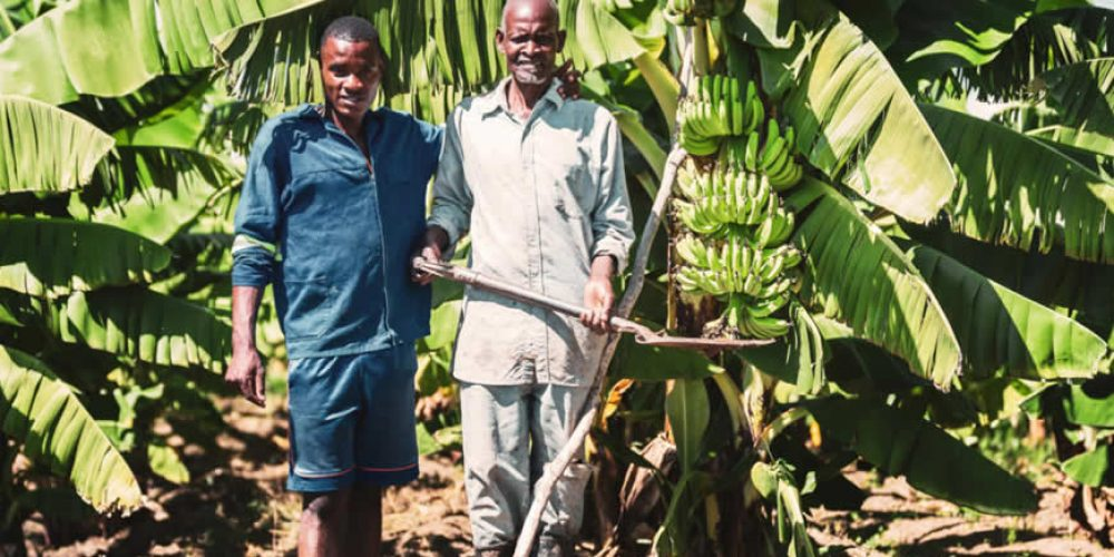 New toolkit on advancing human rights policy and practice in the agribusiness sector