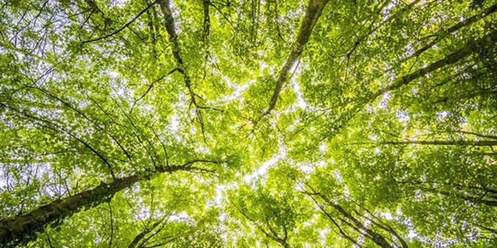 Odpovědnost společností za škody na životním prostředí