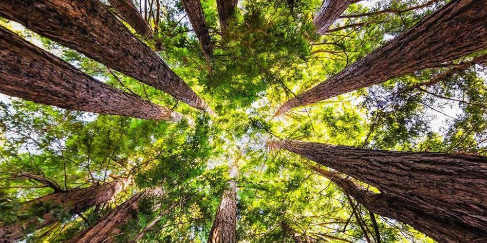 Co může příroda udělat pro klima vpost-COVID světě (anglicky)
