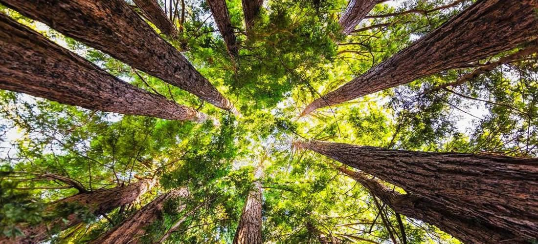 What nature can do for the climate in a post-COVID world