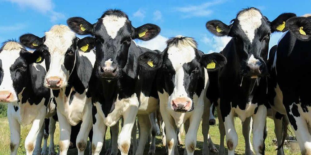 Zemědělci požadují jednotný přístup křešení klimatických změn (anglicky)