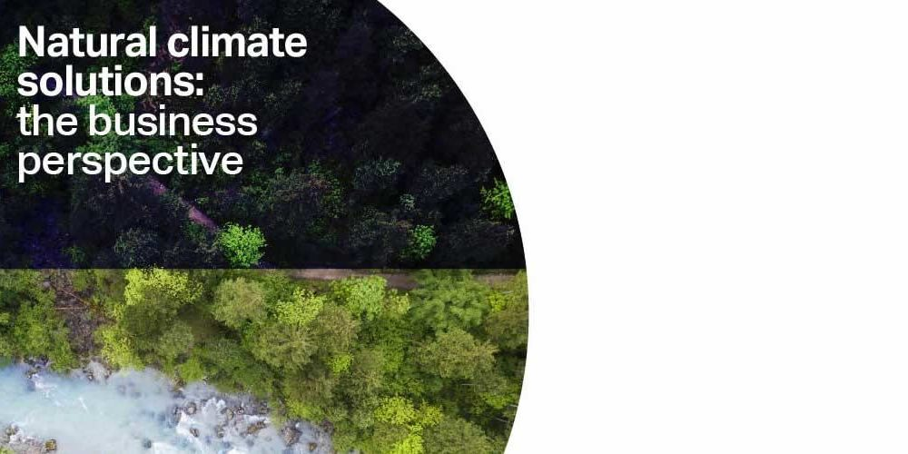 Natural climate solutions: the business perspective