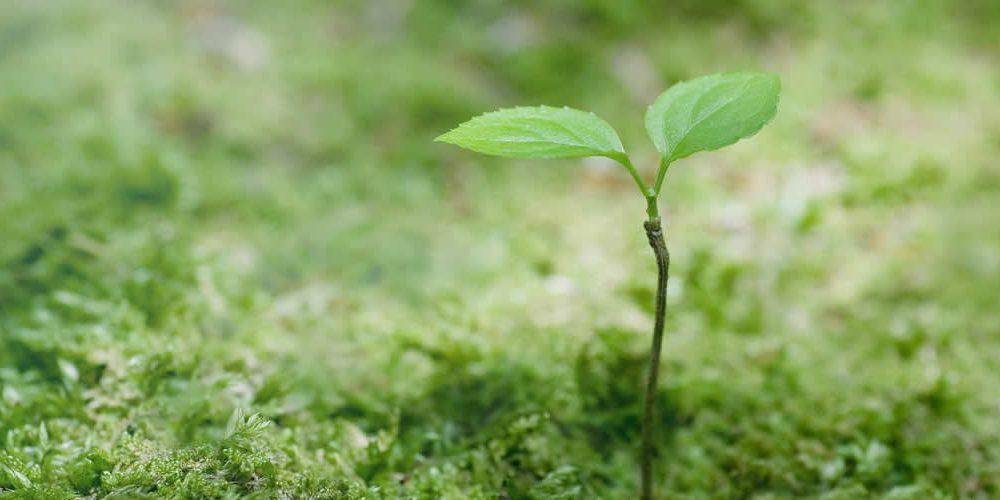 Výzkum MUNI : Češi mají rádi přírodu, chránit ji má ale stát